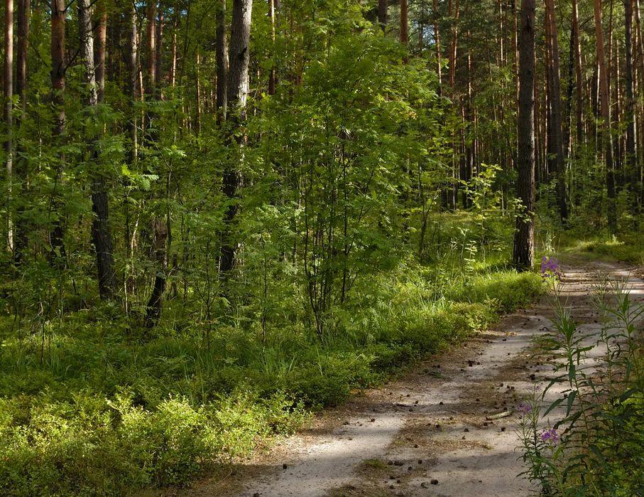 Площадь лесного фонда Тверской области увеличится на 12,6 тысячи гектаров