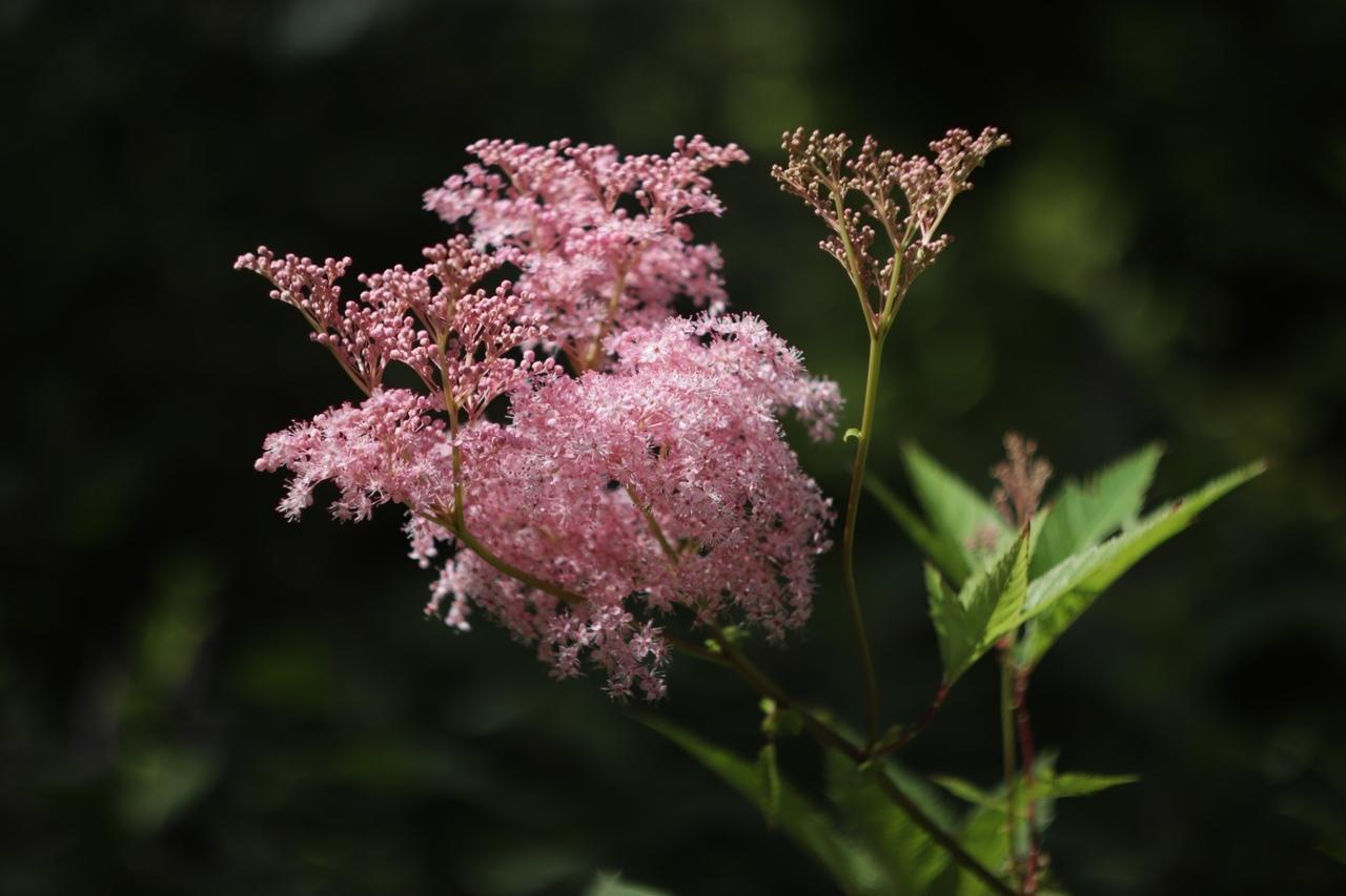 В тверском Саду души появились розовые тени