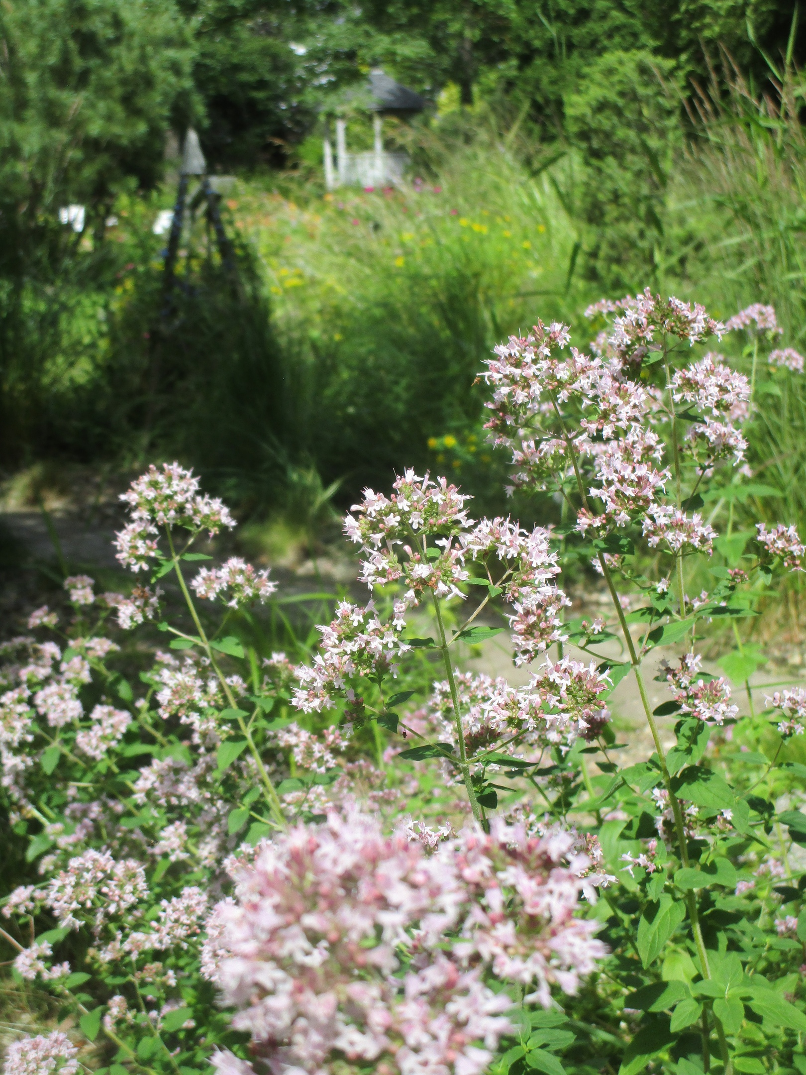 Восхитительные цветы распустились в тверском Ботаническом саду