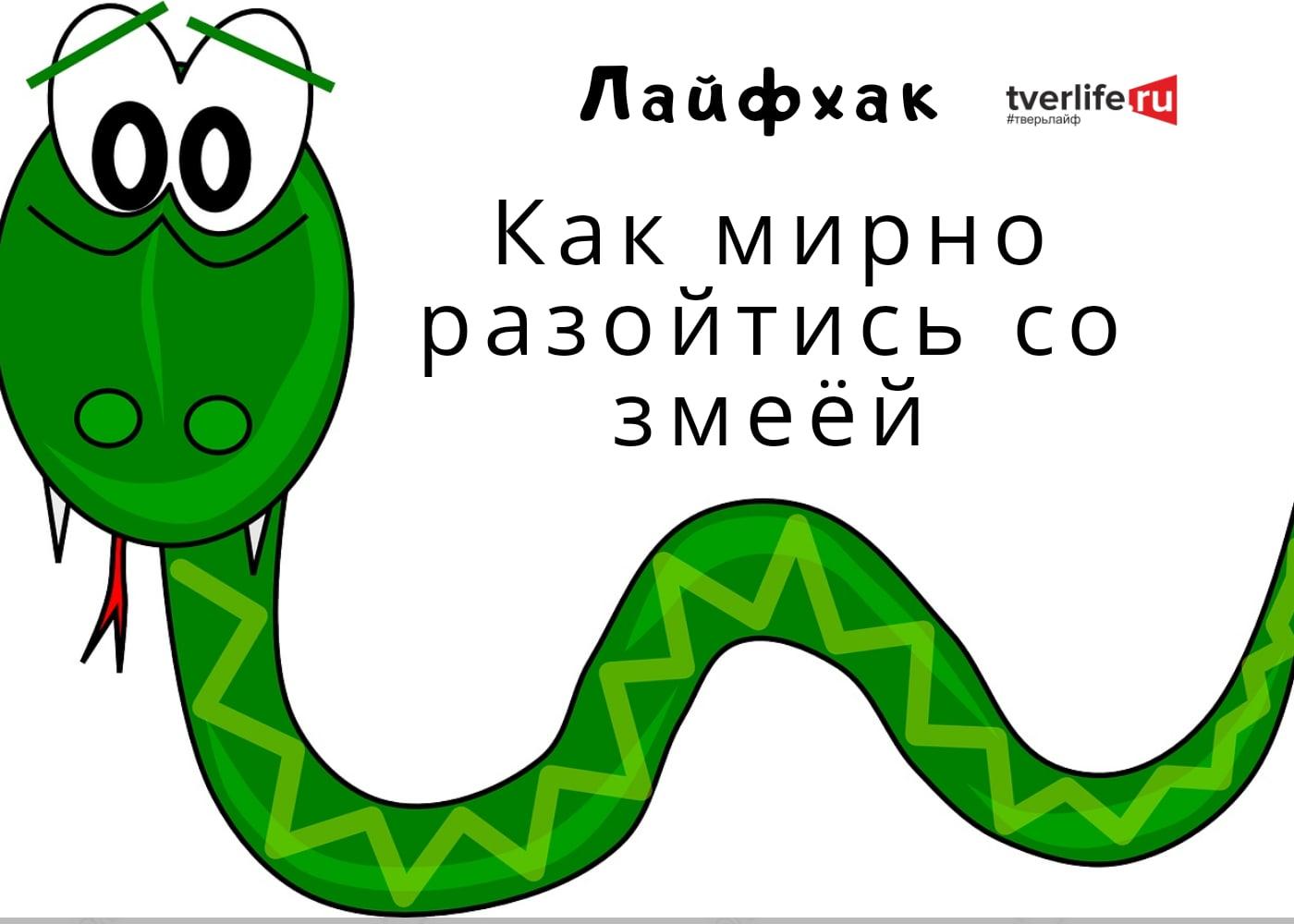 Где прячутся змеи и как не попасть гадюке на зубок в Тверской области