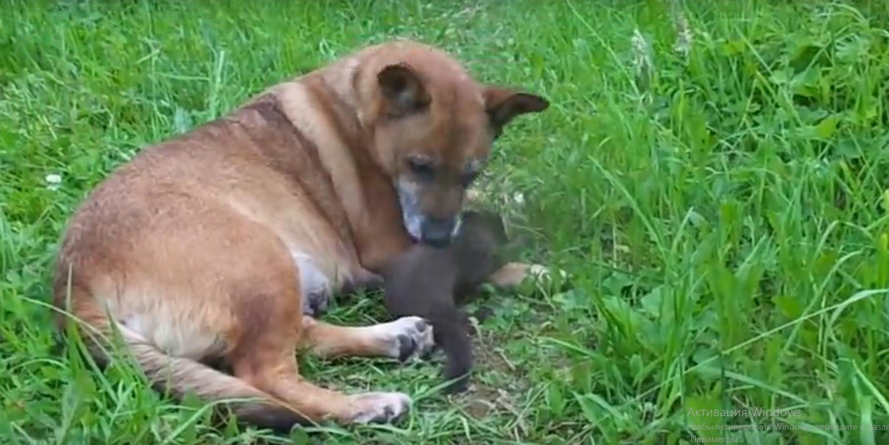 В Тверской области маленькая куница подружилась с собакой