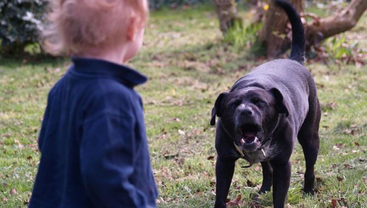 Под Тверью бездомная собака покусала трехлетнего ребенка