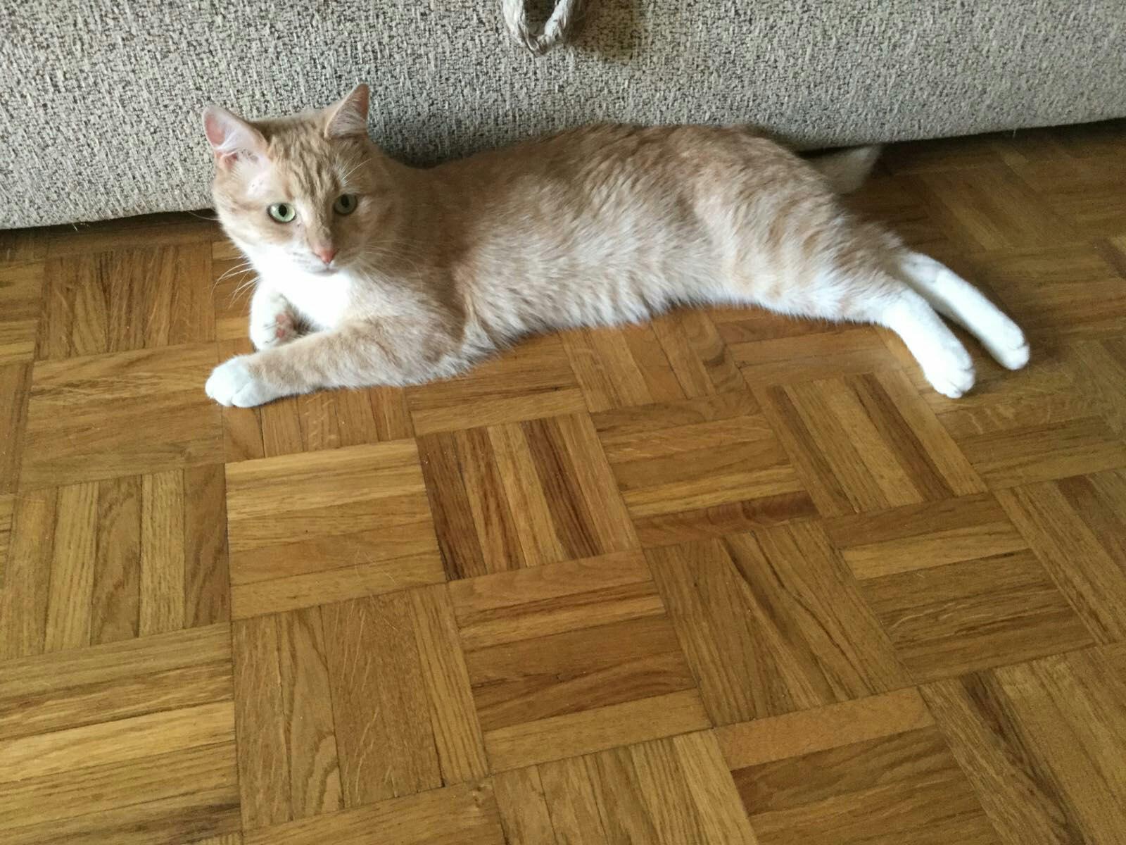 Тверские бездомные кошки ищут заботливых хозяев