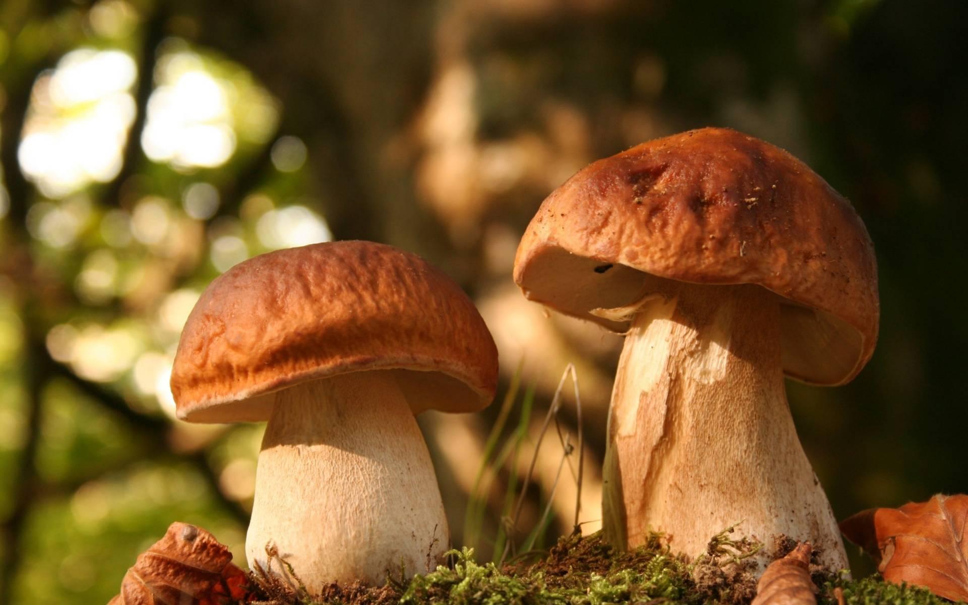 Рекомендации Роскачества: как правильно собирать и покупать грибы