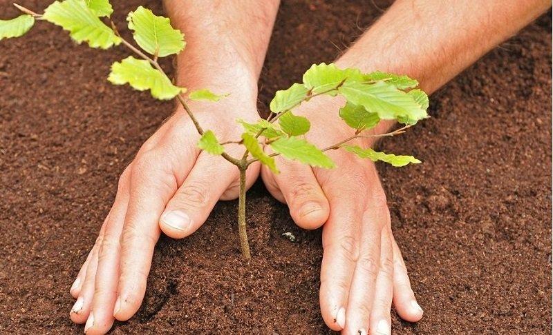 В Тверской области высадили самое большое количество деревьев в ЦФО