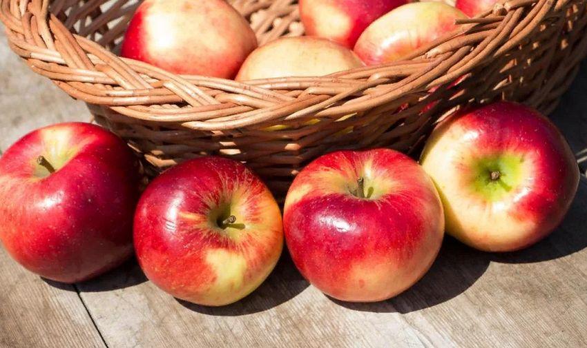 Яблочный спас: Tverlife.ru рассказывает, как правильно и с пользой провести этот день