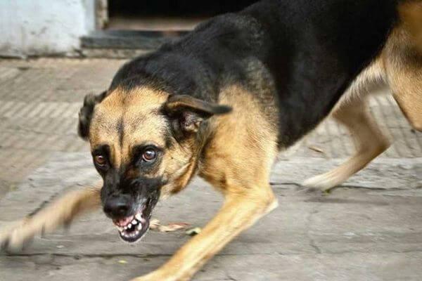 Больной бешенством пёс жил с хозяевами в доме в Тверской области