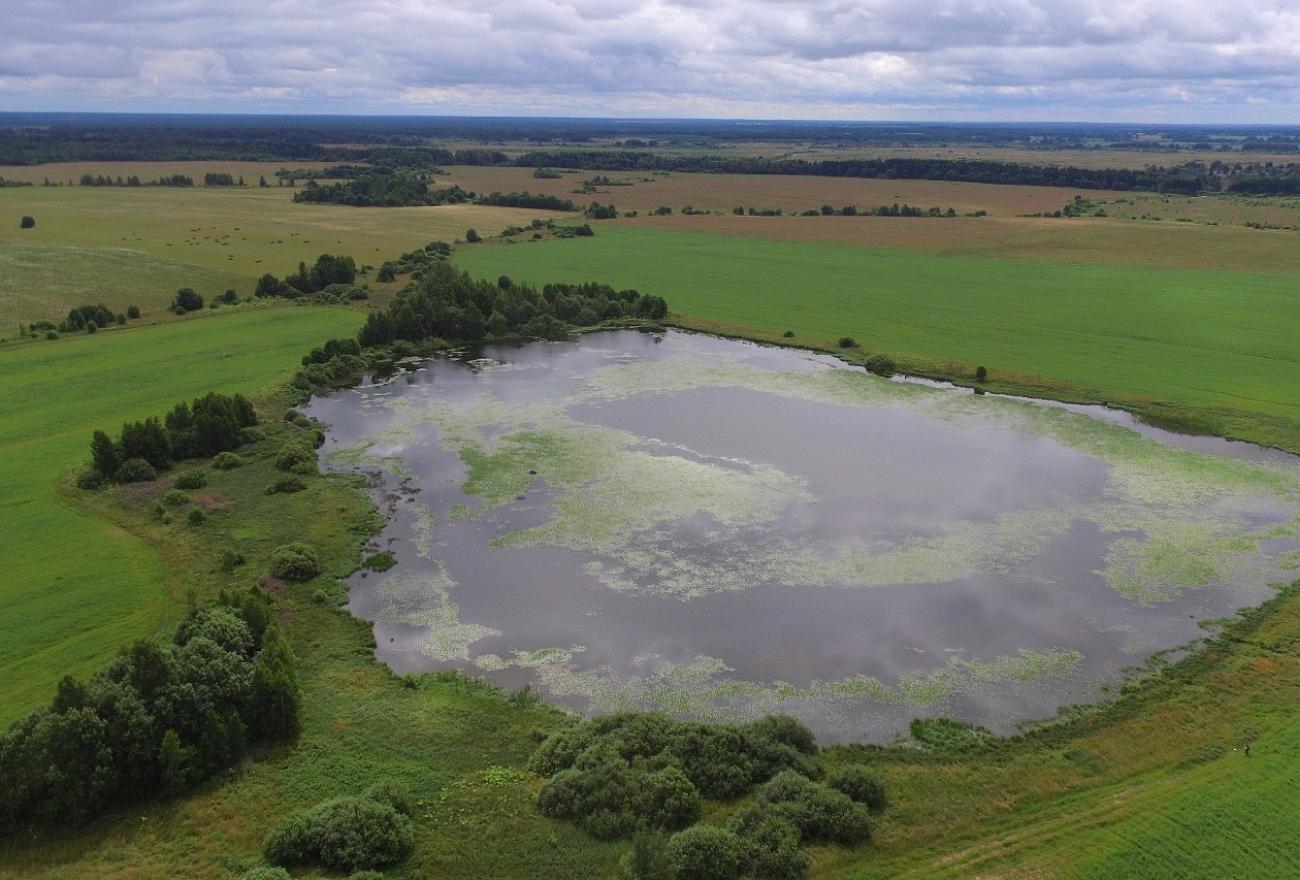 В Тверской области на озере обнаружили пару редких лебедей