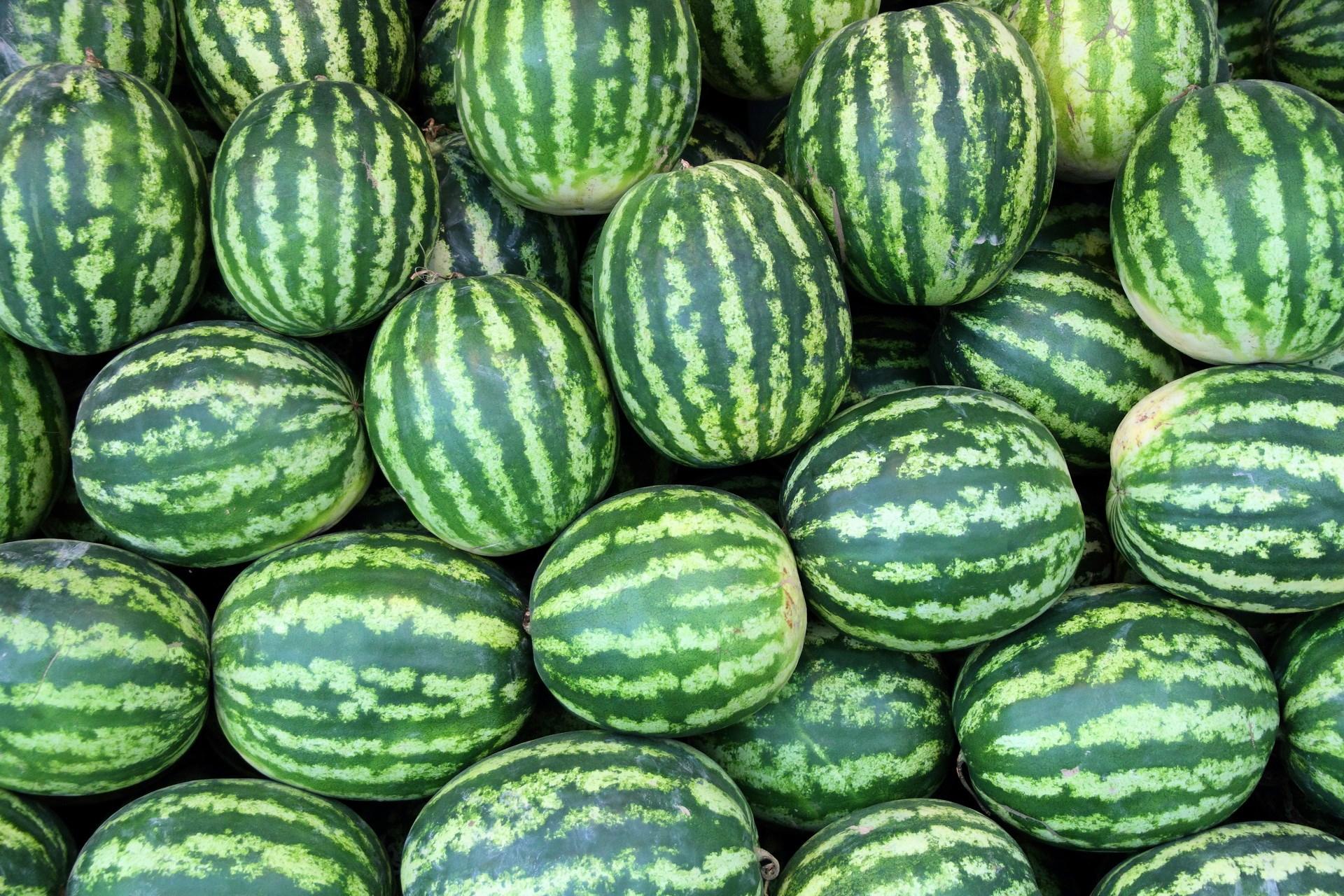 Всемирный день арбуза: как выбрать спелый и сладкий зелено-полосатый в Тверской области