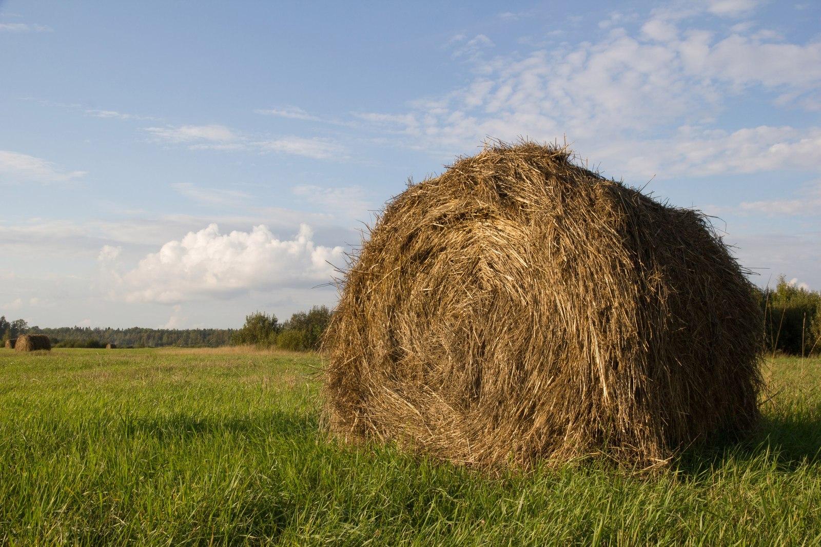 600 килограмм сена украл и продал предприимчивый мужчина из Тверской области