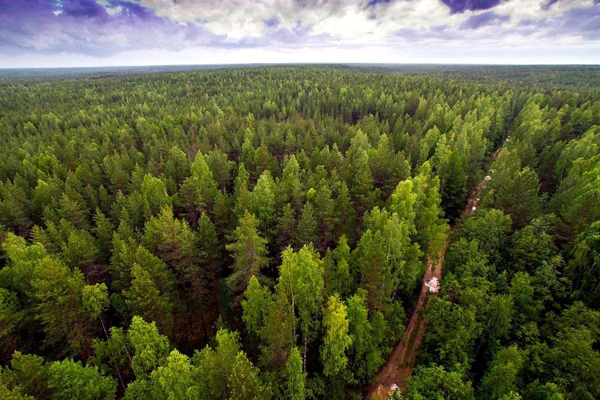Лесной фонд Тверской области увеличится более чем на 1100 гектаров