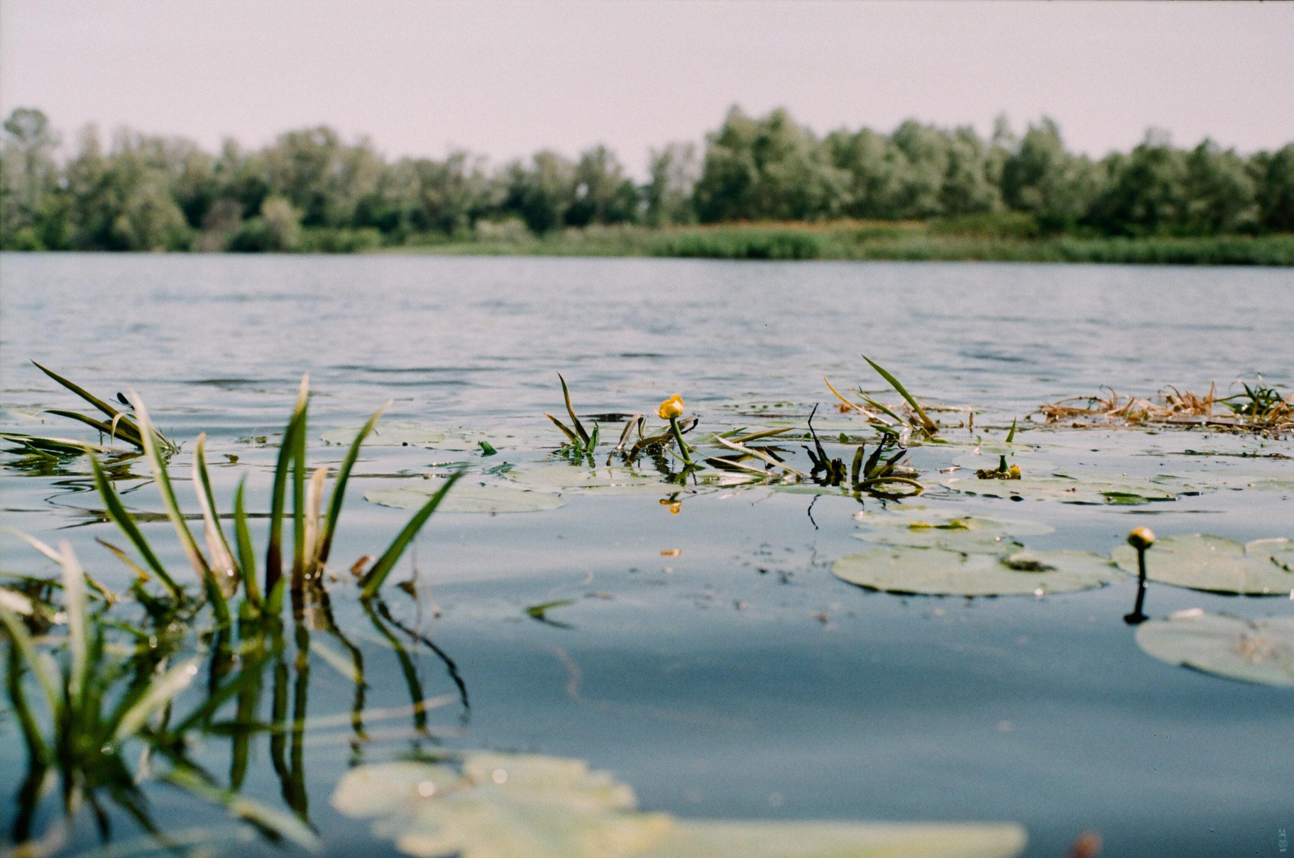 В Тверской области на Волге утонул мужчина