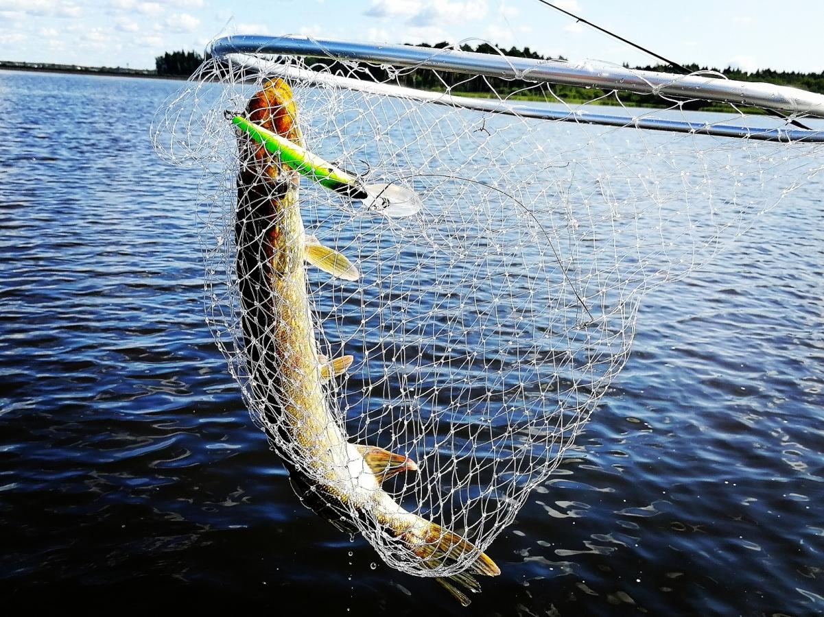 Тверские рыболовы разыграют кубок «RusAllochki»