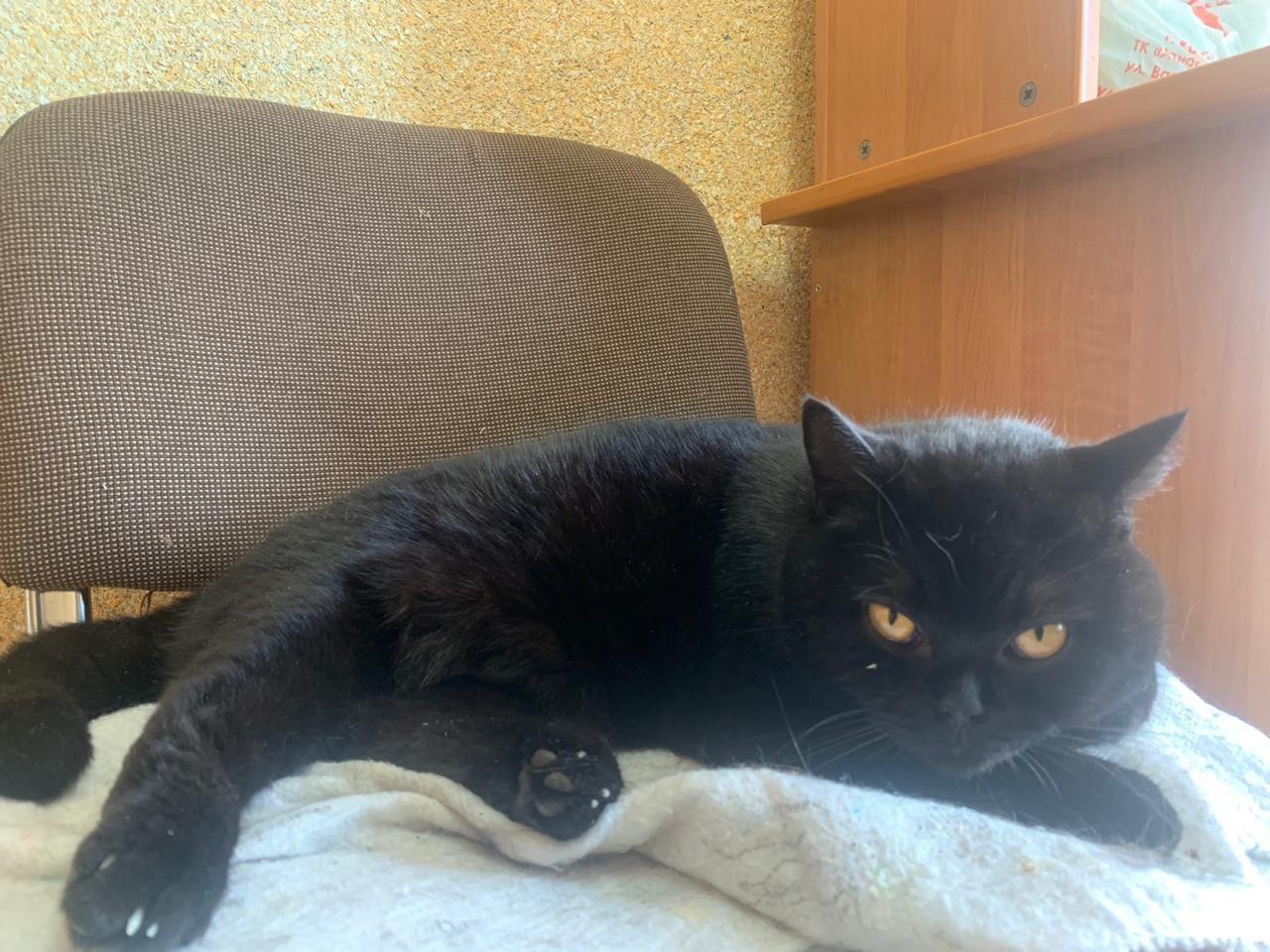 В Твери нашелся цирковой кот Марсель
