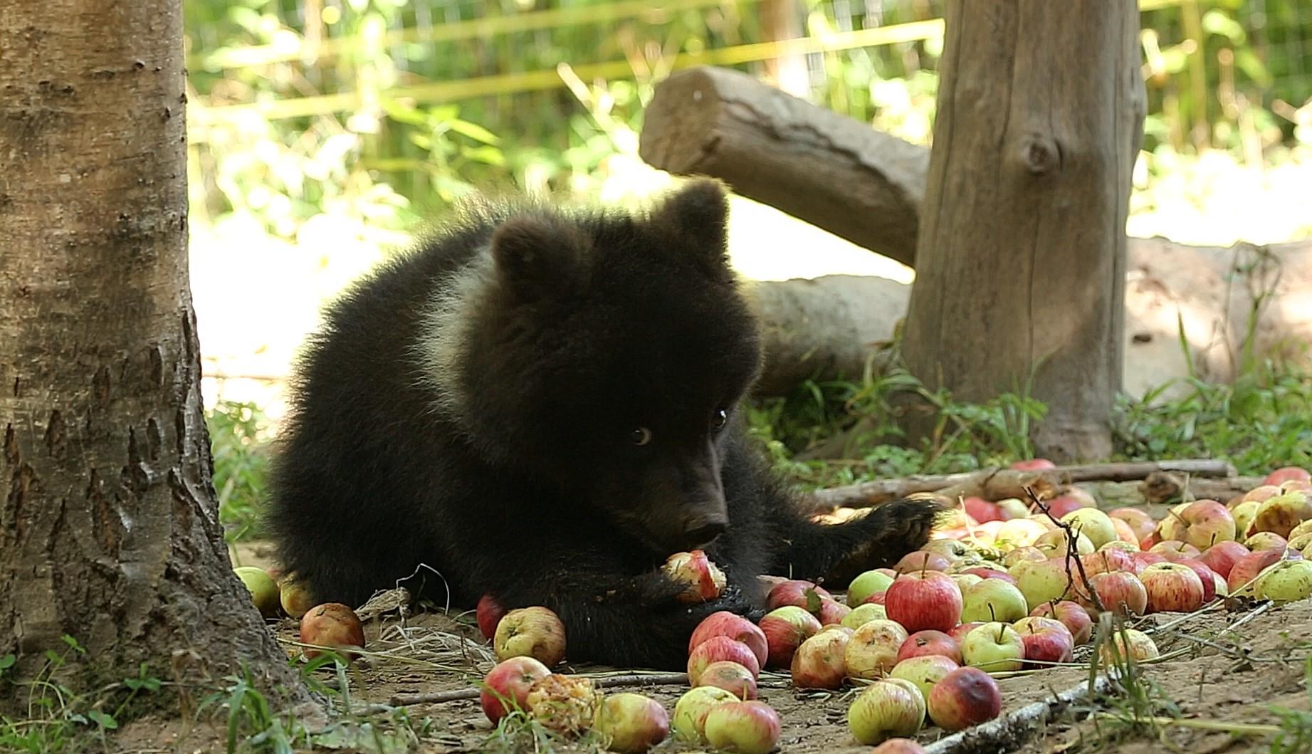 Медведица Пужа из Тверской области передает привет