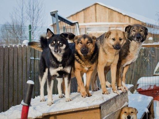 В Краснохолмском районе собирают помощь бездомным животным