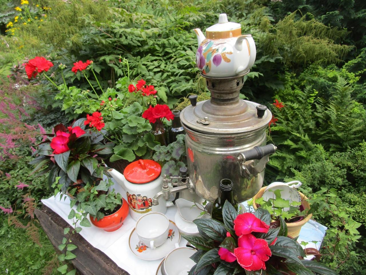 Тверской Ботанический сад готовит новую выставку