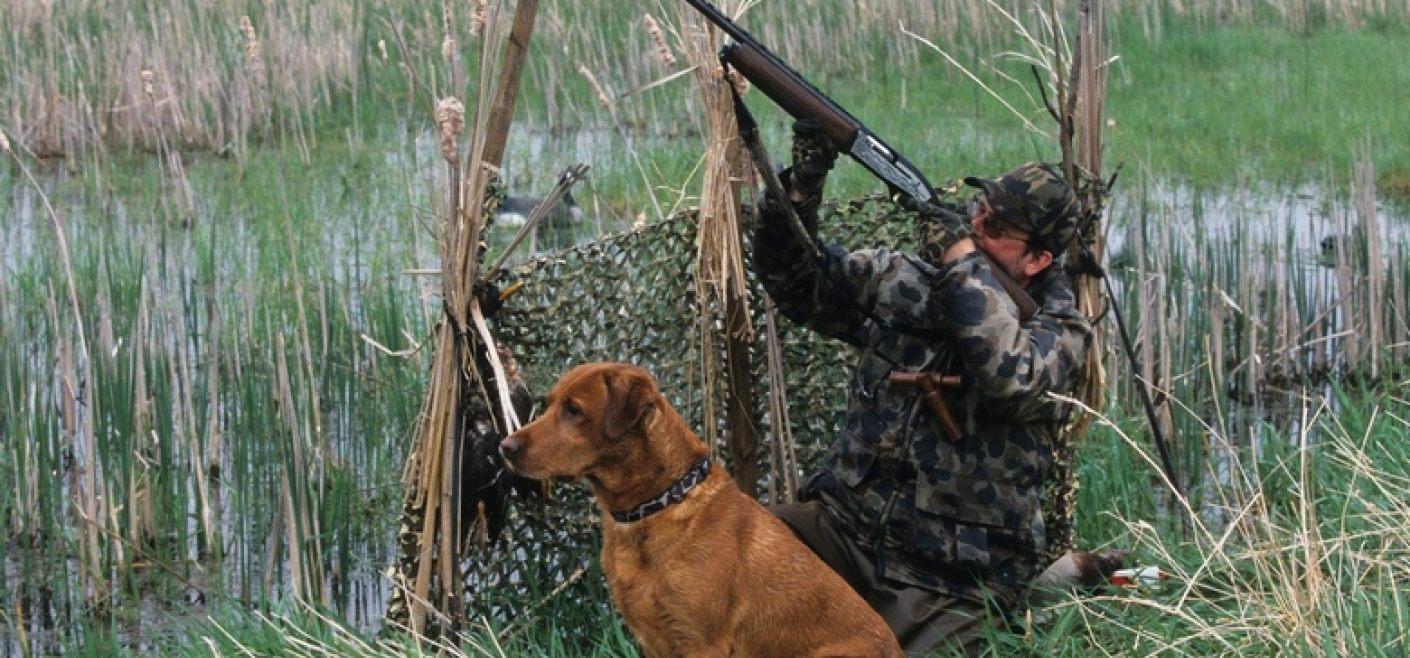 В Тверской области начинается сезон охоты на дичь