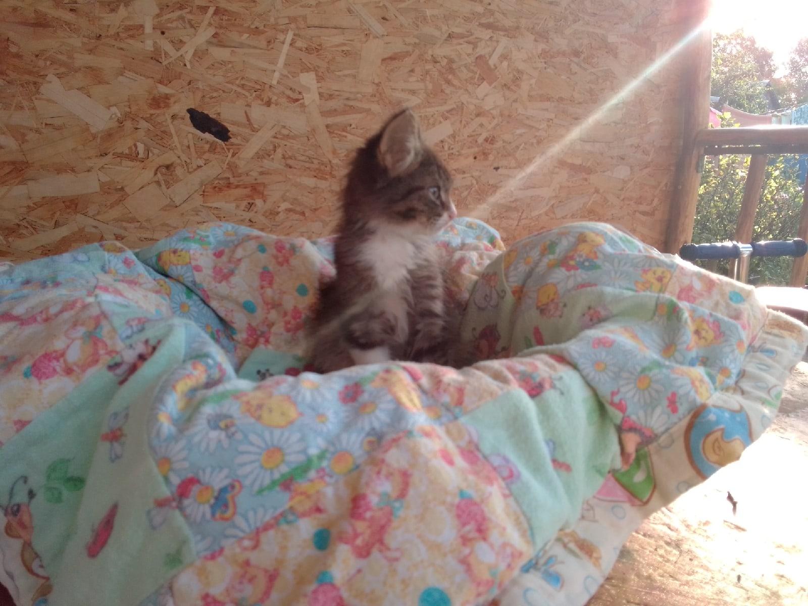 В Твери ищут заботливые руки для брошенных котят