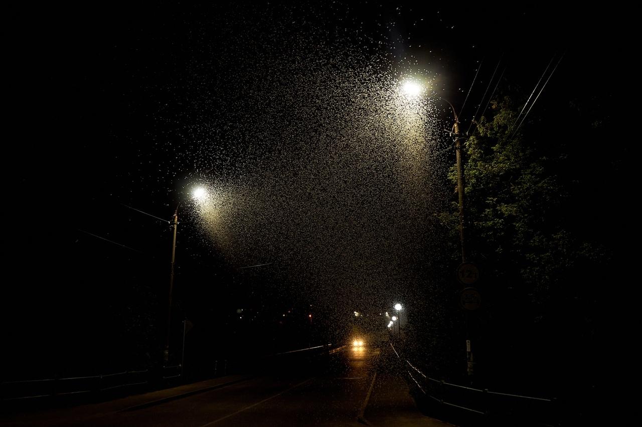 В Тверской области в воздух поднялись тучи бабочек-однодневок