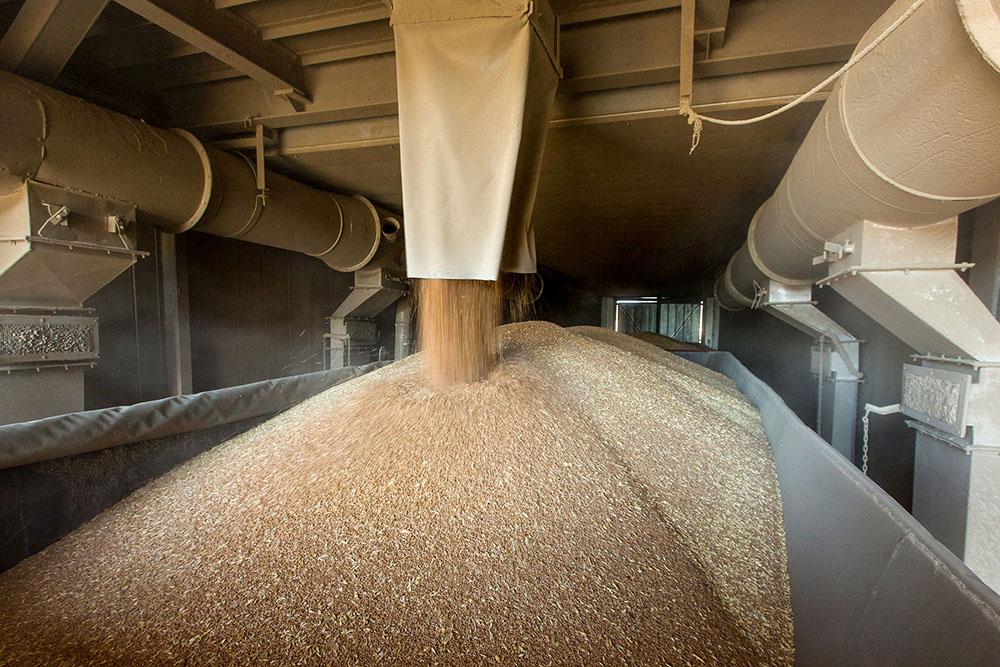 В Тверской области на элеваторы ГК «Агропромкомплектация» поступило 220 тонн зерна для кормов