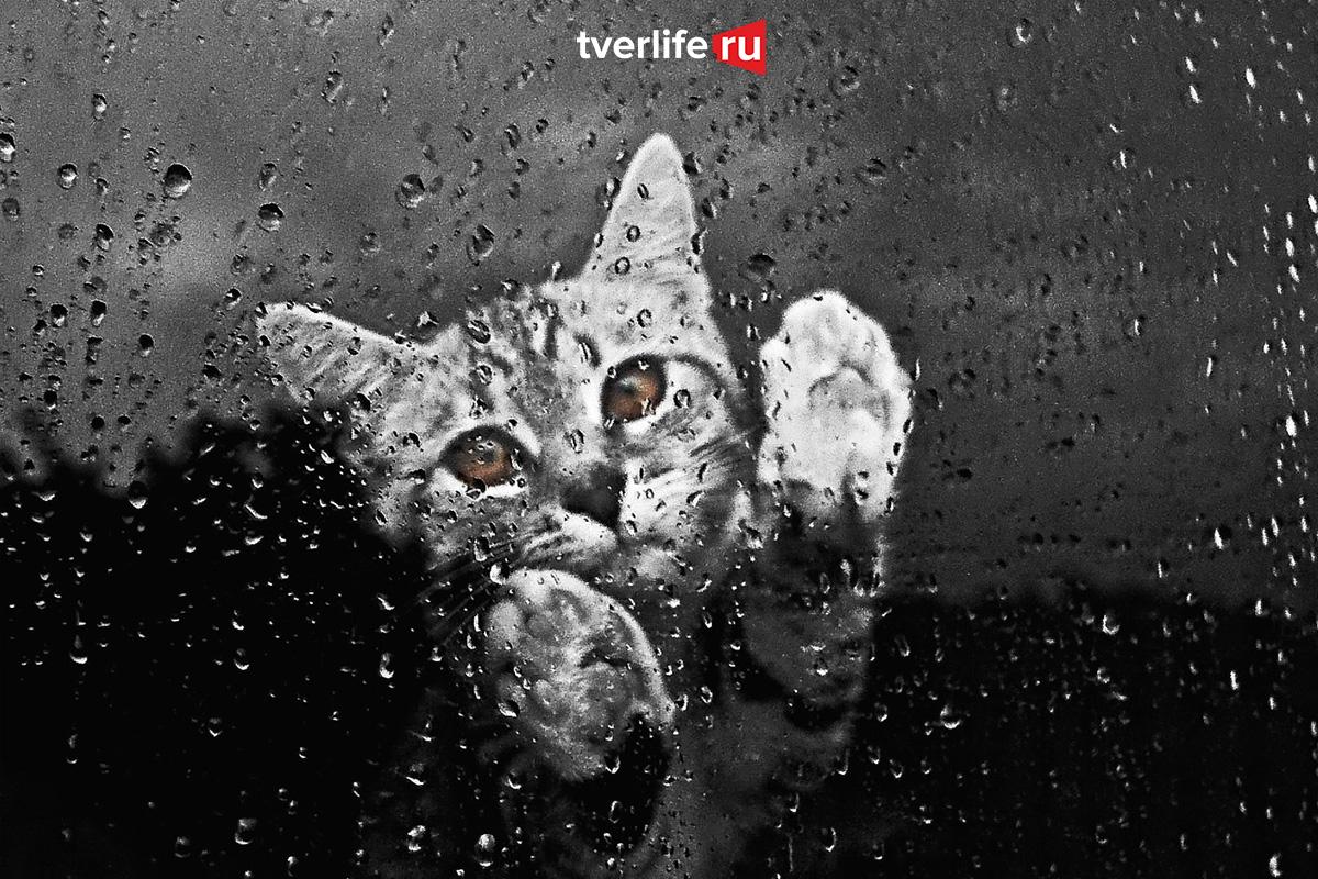 Вечер воскресенья в Тверской области будет дождливым