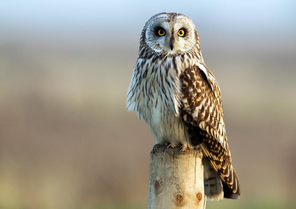 В Тверской области сова восстановилась после ДТП