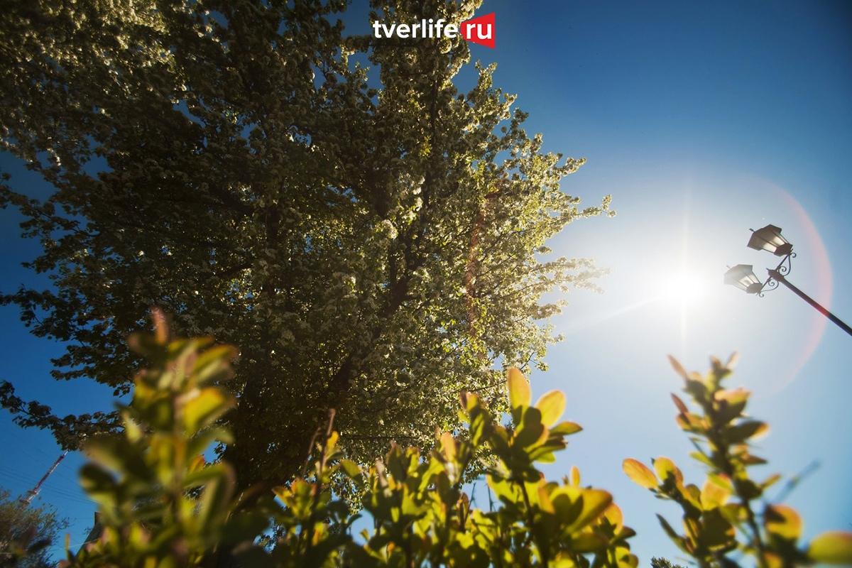 В Тверскую область вернулось летнее тепло