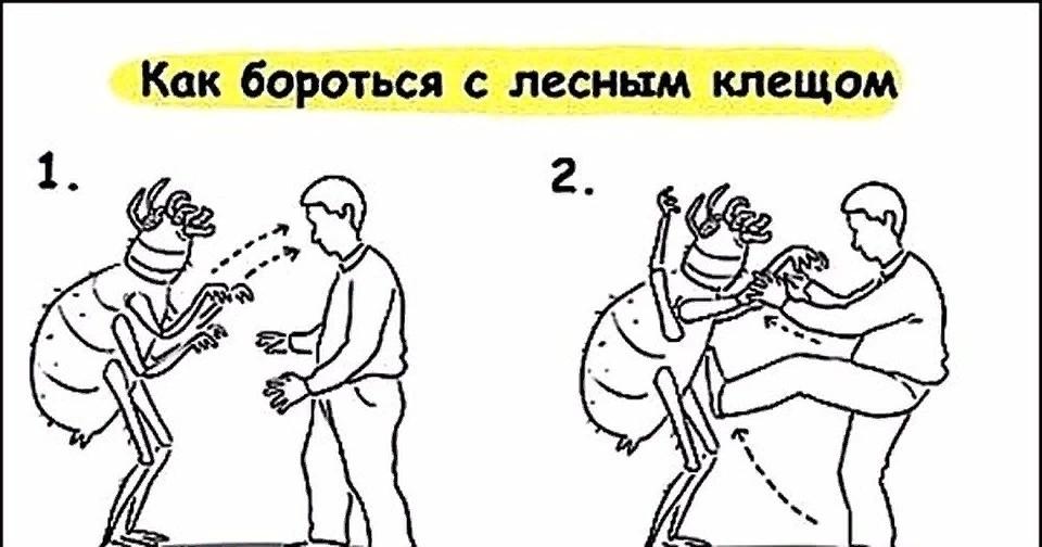 Жителям Тверской области рассказали, как бороться с клещами