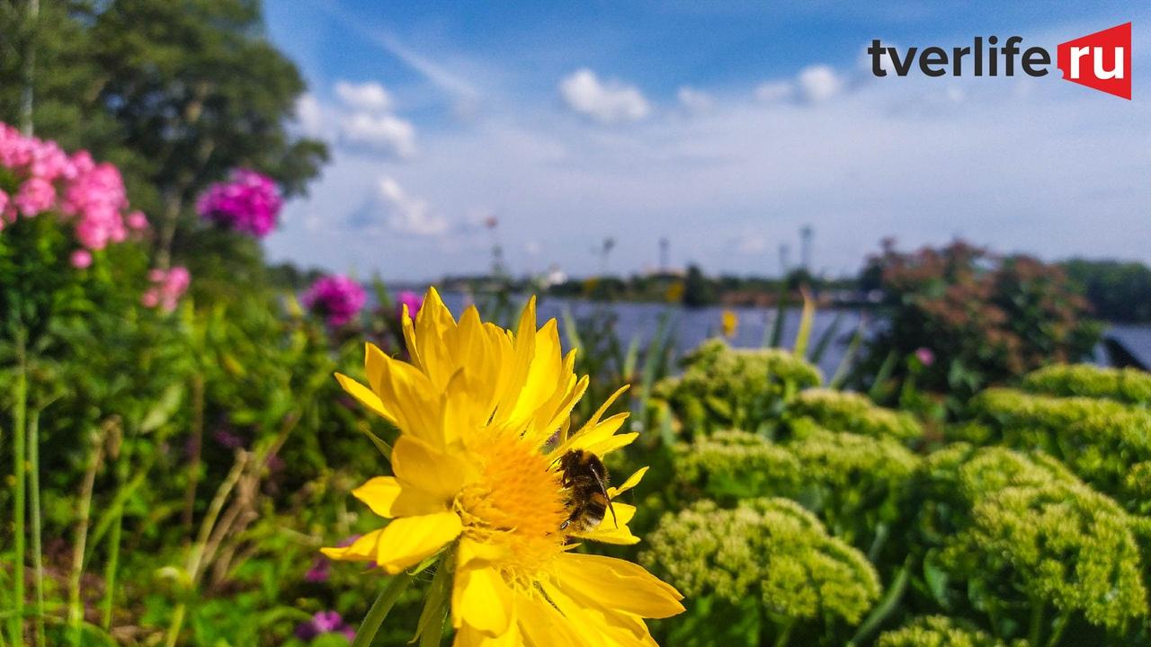 Лето не закончилось: тепло вернется в Тверскую область уже в выходные