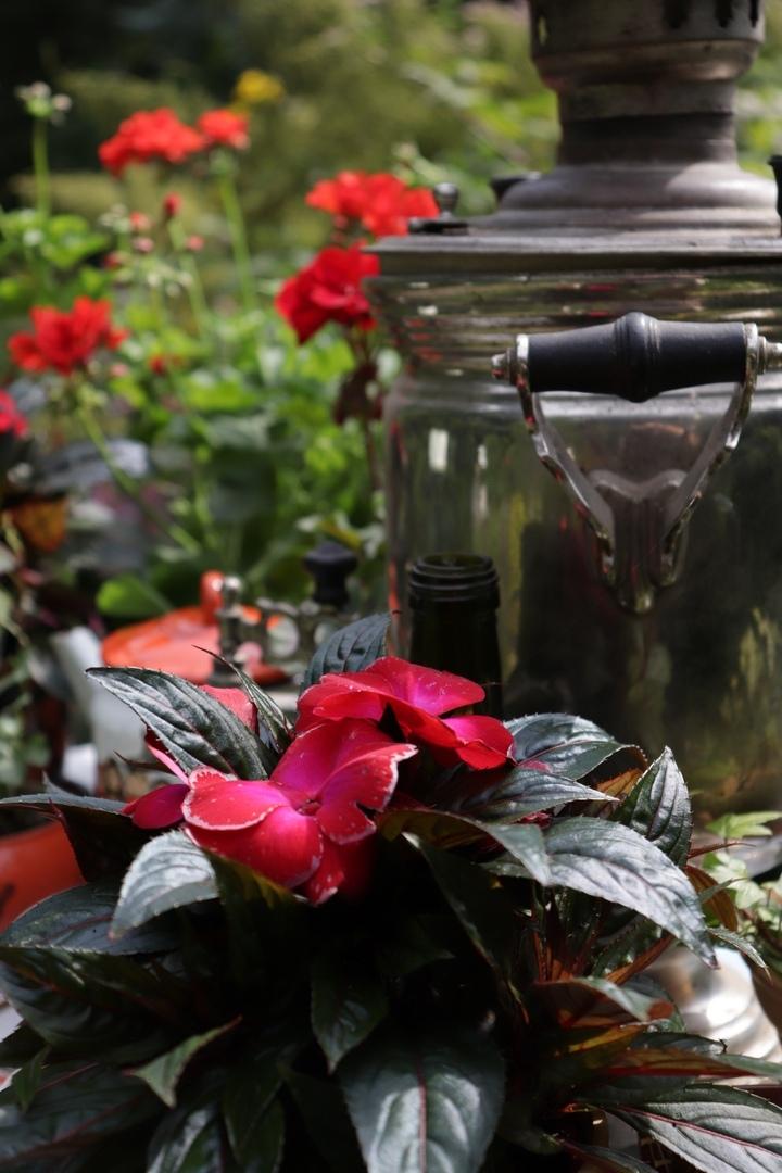 В тверском Ботаническом саду открыли самую трогательную выставку цветов
