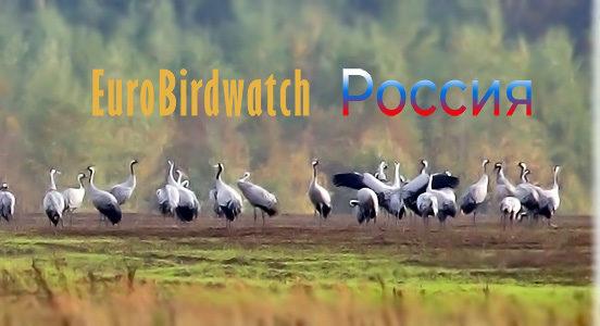 В Твери будут считать птиц по европейской системе