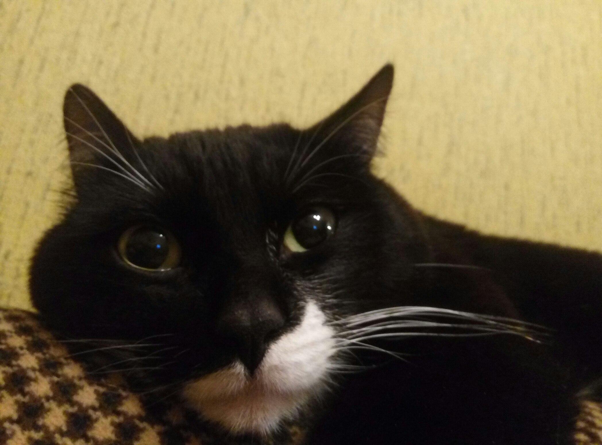Теплый плед и теплый кот: Как правильно выбирать питомца в Твери