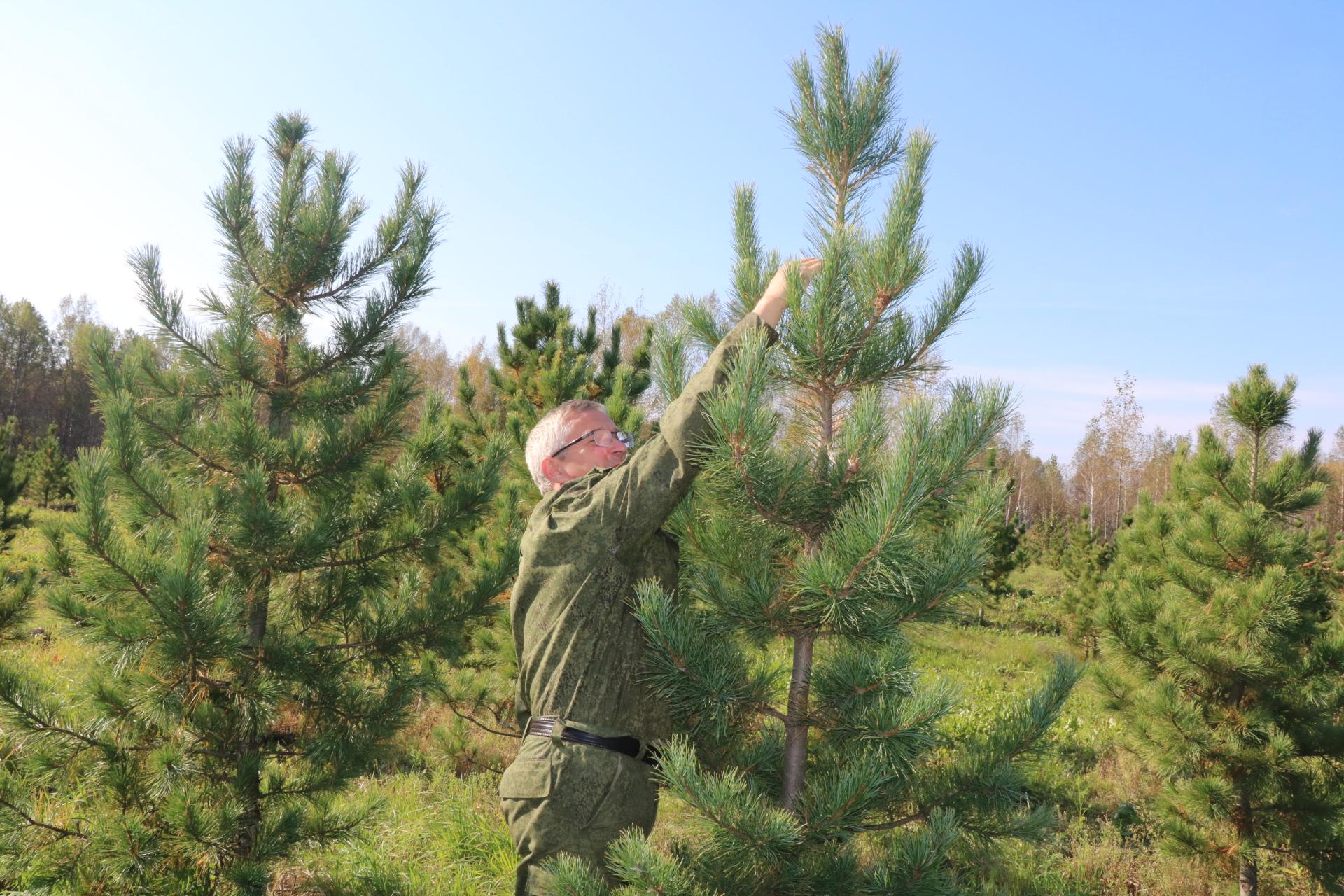 Игорь Руденя поздравил работников лесного комплекса Тверской области с профессиональным праздником
