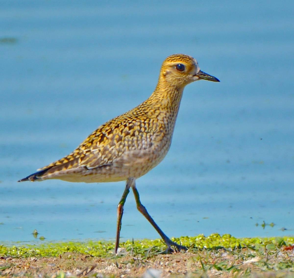 В Тверской области нашли птицу из Красной книги