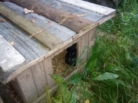 В Оленинском районе полиция нашла неизвестное вещество в будке