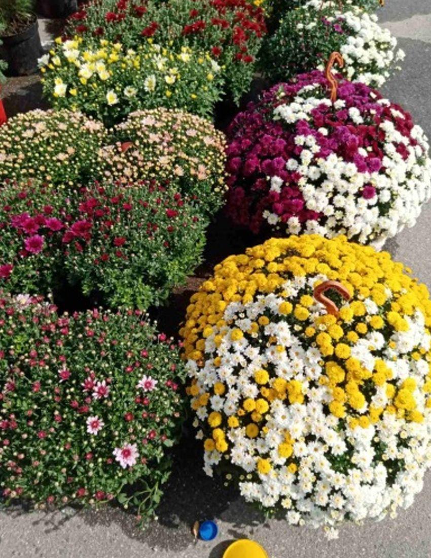 В Тверской области продавали подозрительные саженцы деревьев и семена цветов