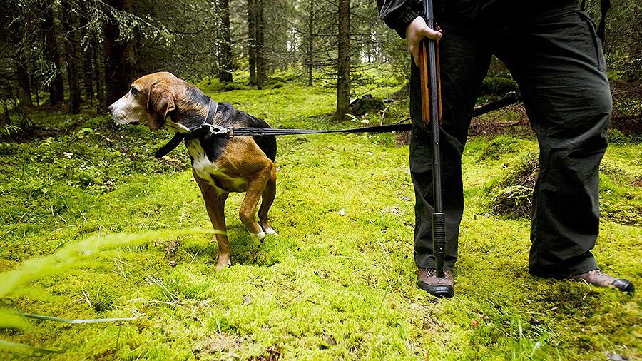 День охотника в Тверской области отметят состязаниями стрелков и выставкой собак
