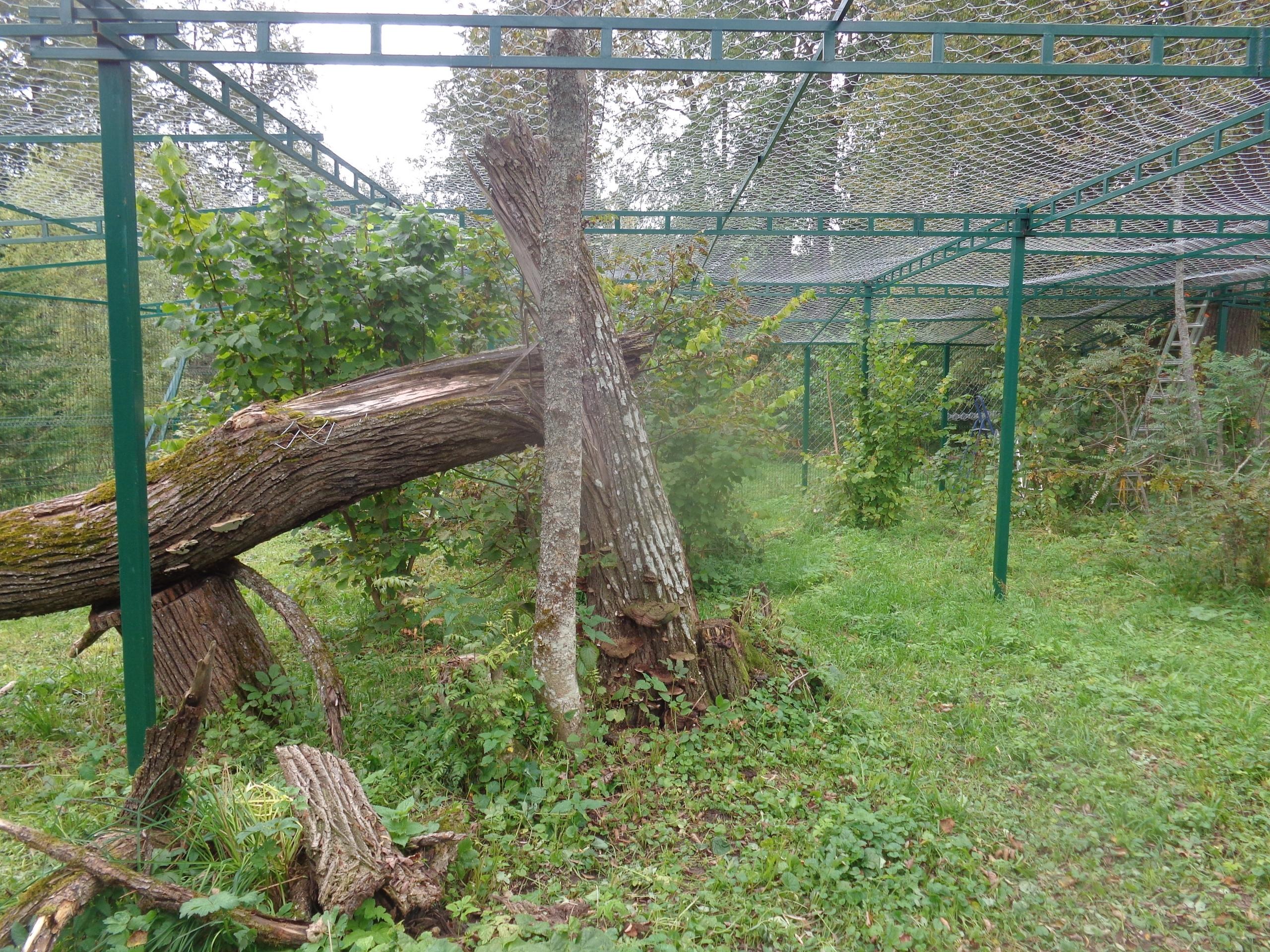 """В Тверском реабилитационном центре диких животных """"Ромашка"""" строят новые вольеры"""