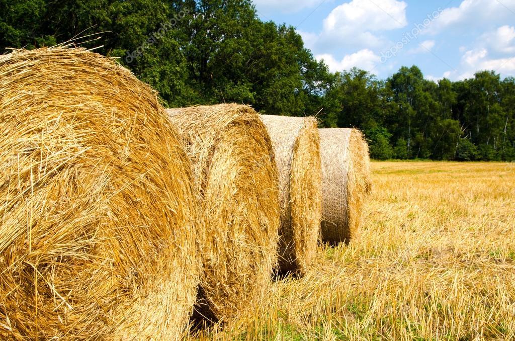 Краснохолмские аграрии заготовили на зиму 780 тонн сена