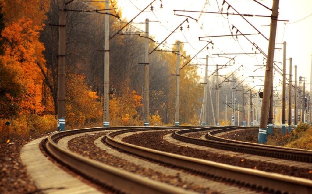 В Тверской области дикие кабаны попали под поезд