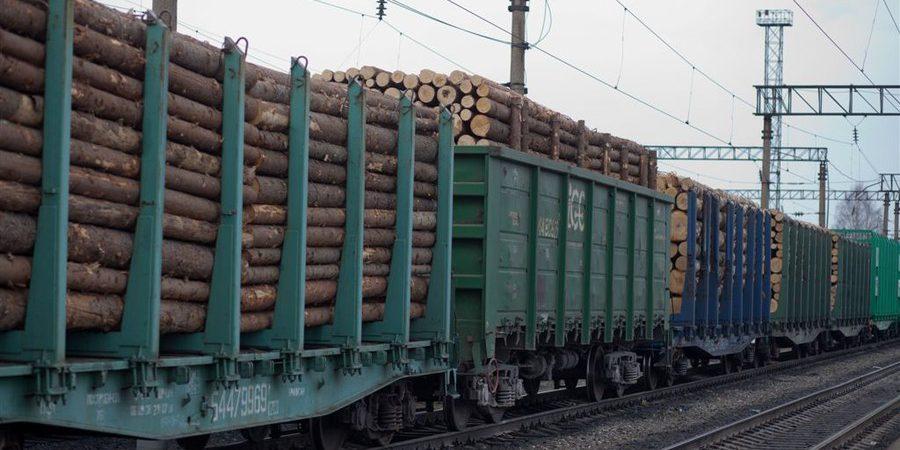Лес рубят - щепки летят: тверские лесозаготовители лишатся возможности продавать древесину за границу