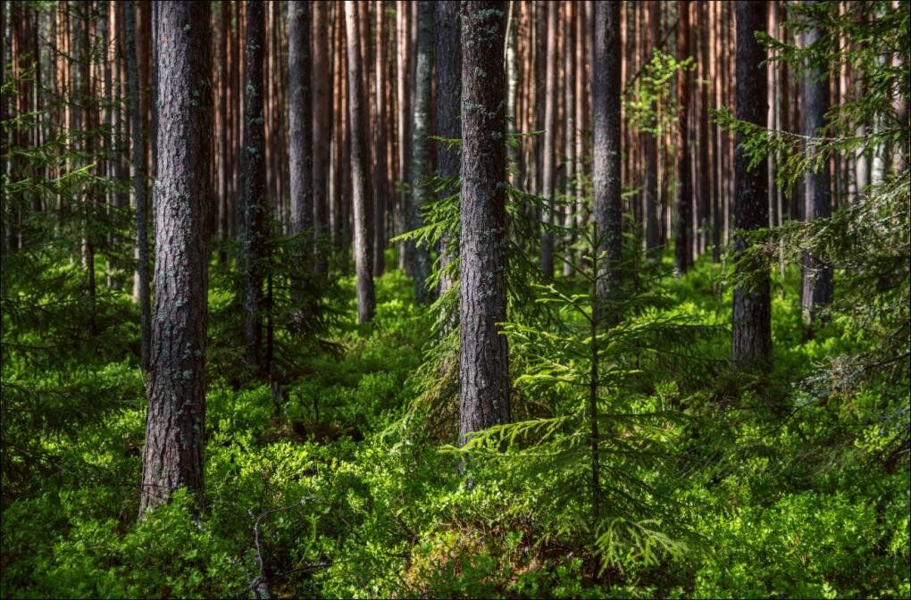 Лесной фонд Тверской области стал больше на 2300 гектаров