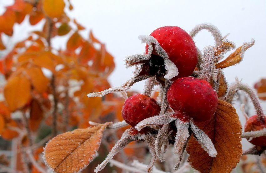 Ночные заморозки вернутся в Тверскую область