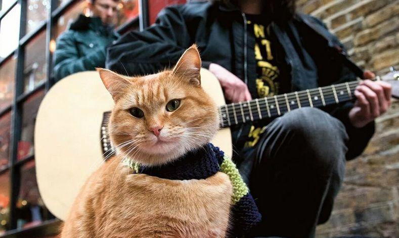 В Твери рок-музыканты сыграют в защиту животных