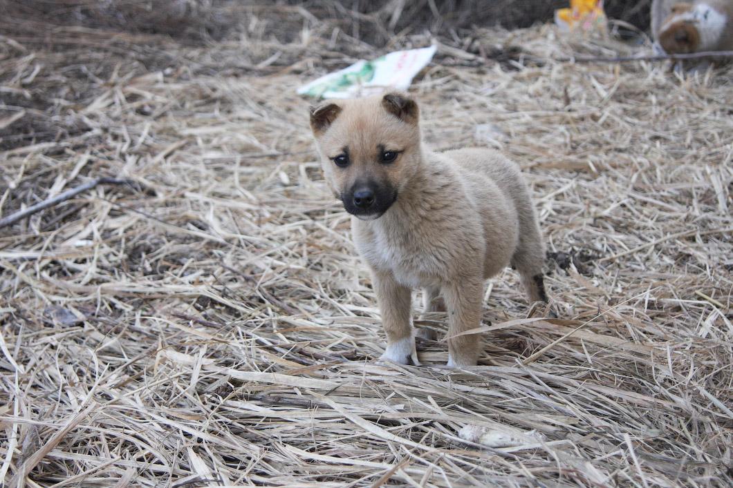 Брошенных собачек накормят и обогреют в новом приюте Тверской области