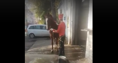 На мойку в Твери гусар привел помыть свою лошадь