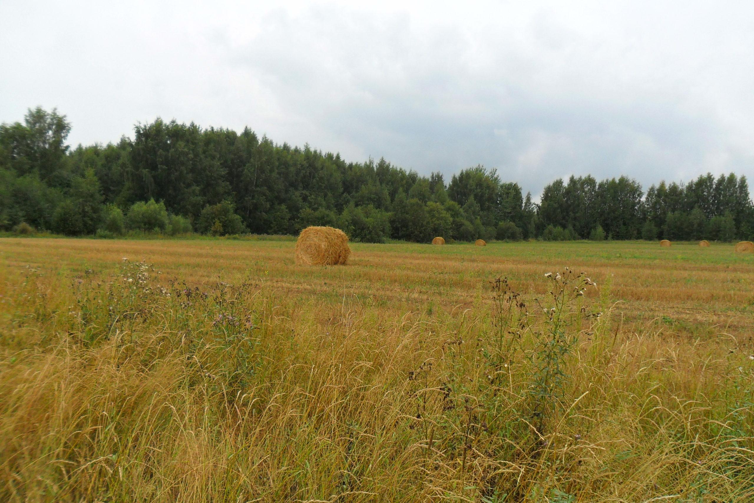 В Рамешковском районе устранены нарушения земельного законодательства
