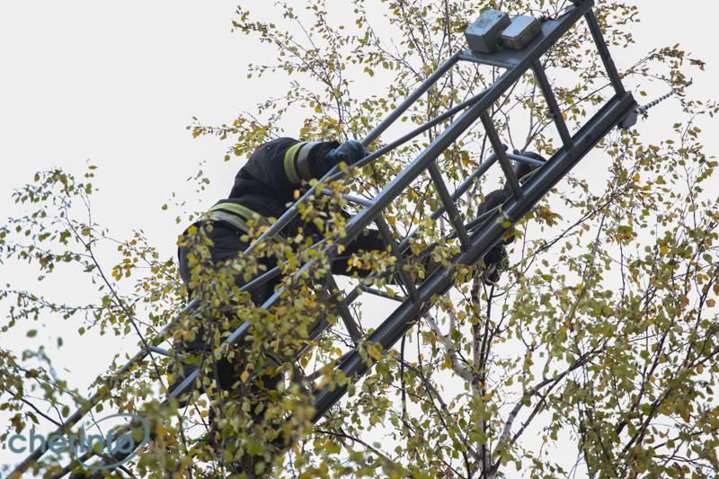 В Твери спасатели сняли с дерева 13-летнюю школьницу
