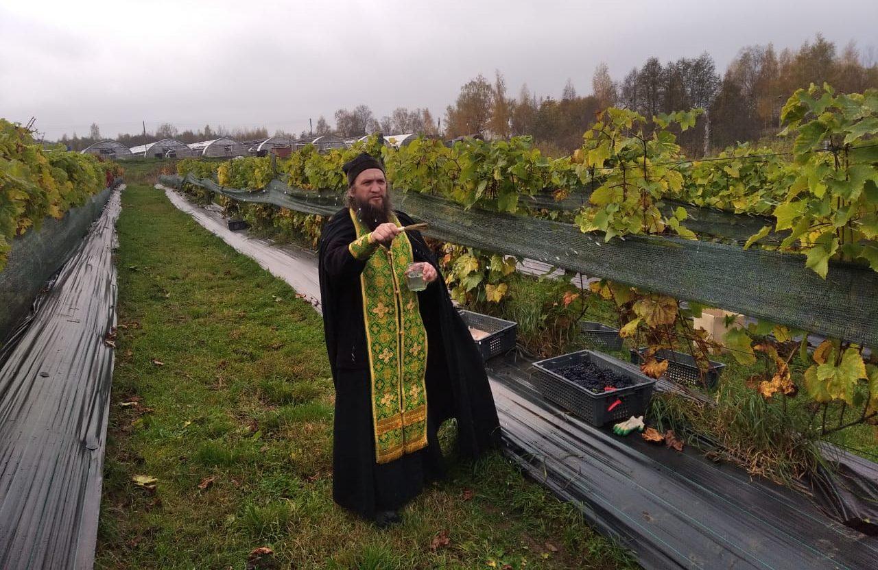 В Нило-Столобенской пустыни собрали урожай винограда